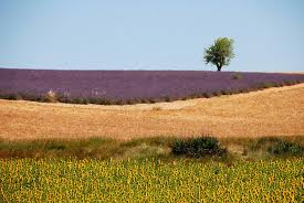 Order Colors of Provence tour