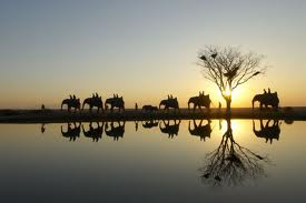 Order 9-Nights South African Family Adventure tour