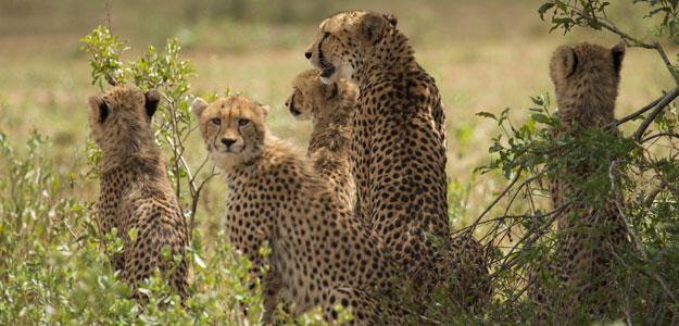 Order Kruger Safari