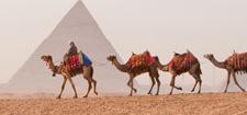 Order Pyramids, Pharaohs and Ancient Treasures tour