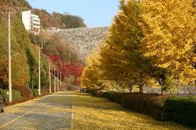 Order Korea Autumn tour