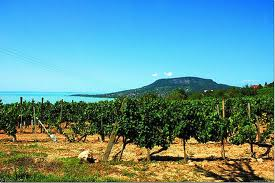 Order Wine and bike in Balaton Uplands National Park Tour