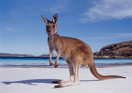 Order 20-Nights Grand Australia and New Zealand Tour