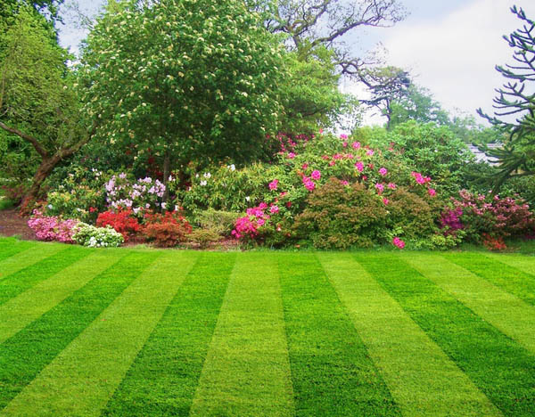 Order Lawn Care
