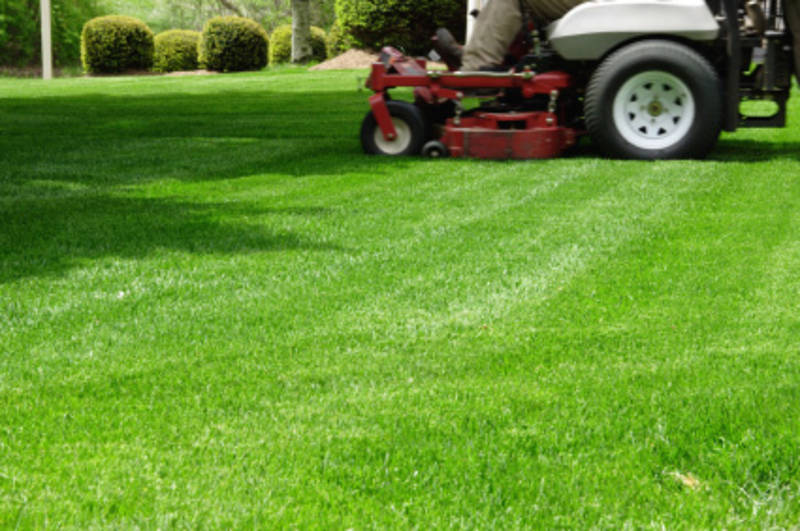 Order Lawn Maintainer Care