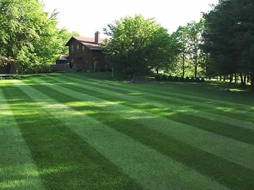 Order Organic Lawn Care