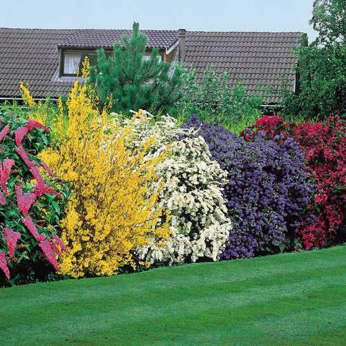 Order Tree and Shrub Care
