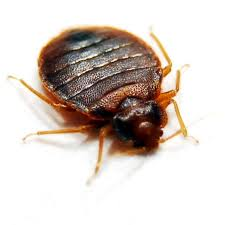 Order Bed Bugs Extermination