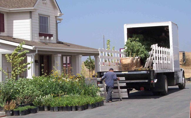 Order Plants Delivery