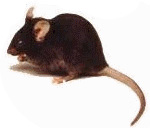 Order House Mouse Control