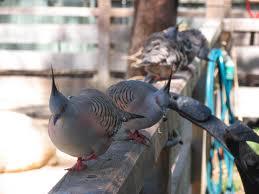 Order City Pigeons Control