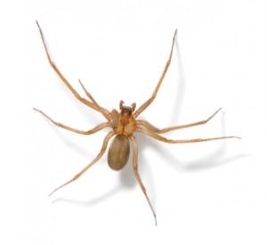 Order Spider Treatment