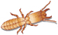 Order Termites Control