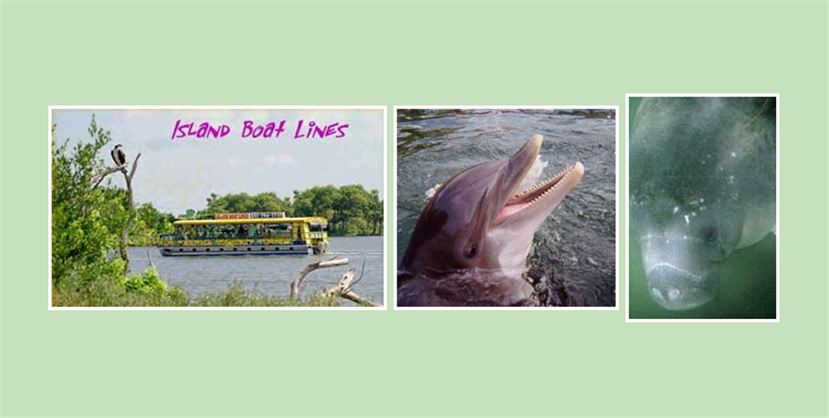 Order Dolphin & Manatees- A Cruise Tour By Pontoon Boat