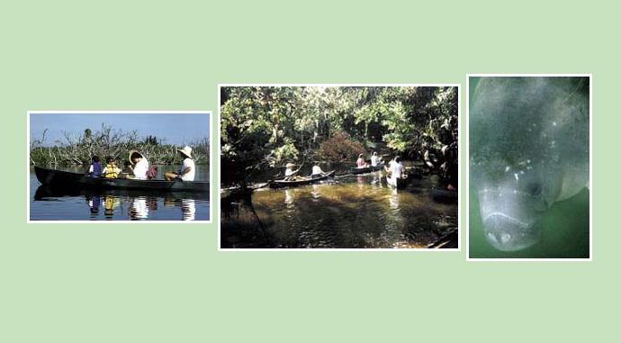 Order Kayaking the Endangered Lagoon Tour