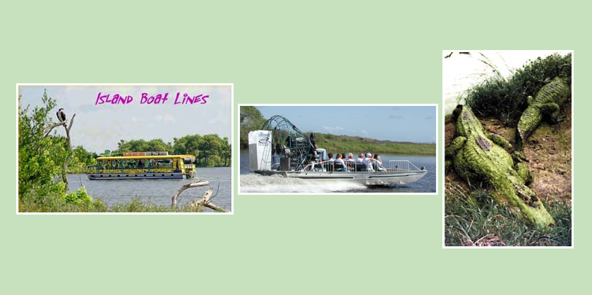 Order Dinner w/Dolphins/Manatees/Alligators Tour