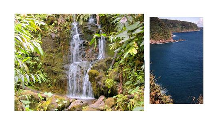 Order One-Day Maui Tour