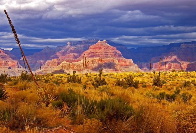 Order Grand Canyon Overnight Bus Tour