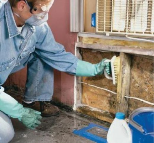 Order Mold Removal and Remediation
