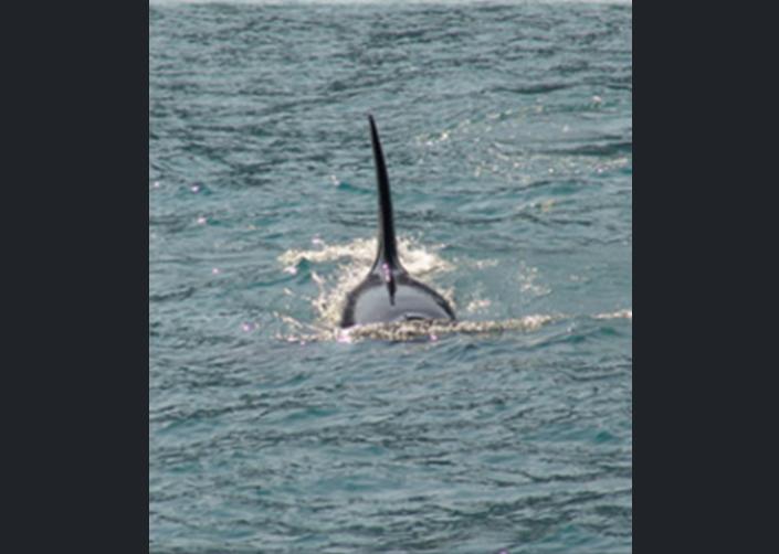 Order Ka'anapali / Ma'alaea Whale Watching Tours