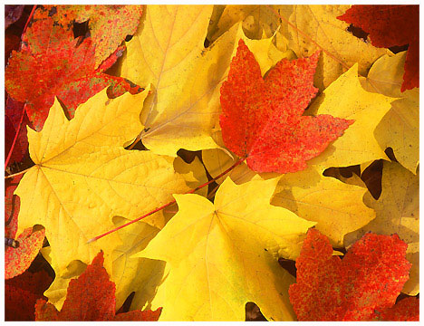 Order Fall Leaf And Seasonal Cleanup