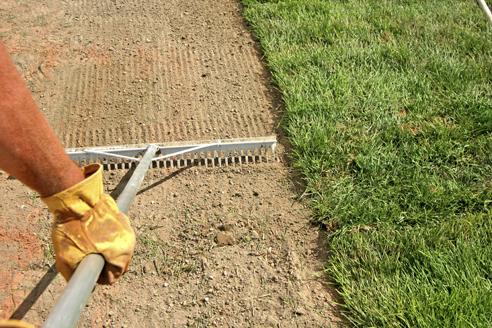 Order Lawn Seeding