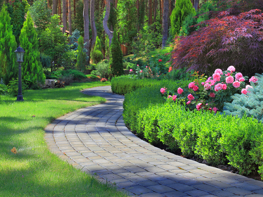 Order Miracle-Gro® Professional Tree & Shrub Care™