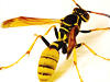 Order Yellow Jackets Control
