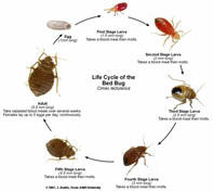 Order Bed Bug Prevention and Control