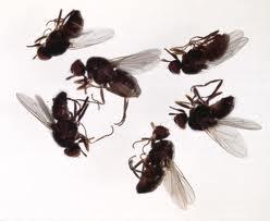 Order Flies Control