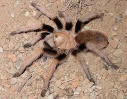 Order Arizona Spider control