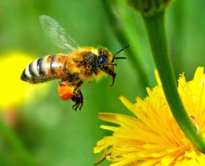 Order Honey Bee Control