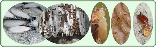 Order Termite Treatment