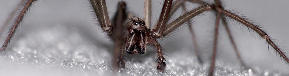 Order Spider Control