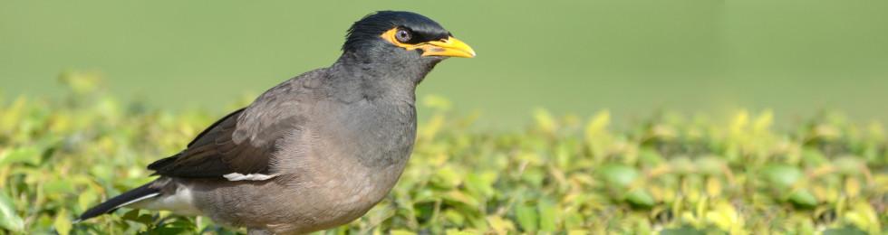 Order Bird Exclusion