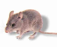 Order Rodent Extermination & Removal