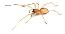 Order Spider Extermination