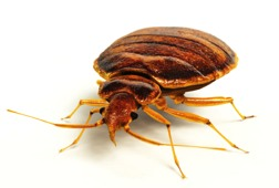 Order Bed Bug Removal and Extermination