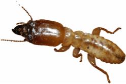 Order Termite Management