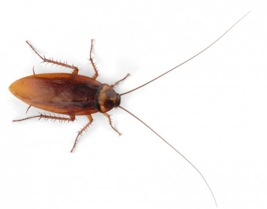 Order Cockroach Control