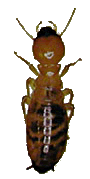Order Subterranean Termite Control