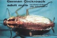 Order German Roach Control
