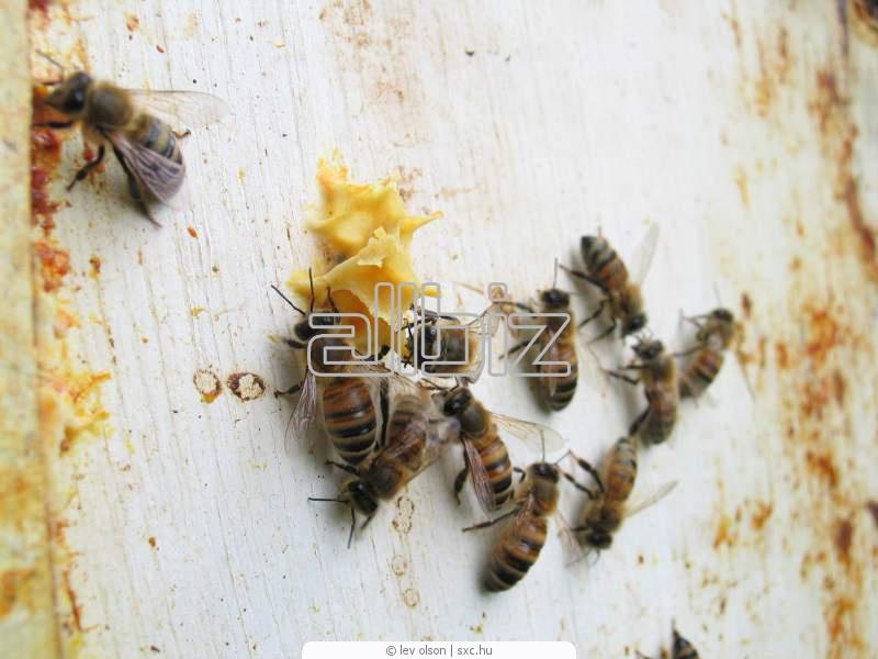 Order Africanized Honeybee Control