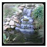 Order Water Gardens / Water Features