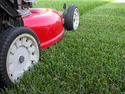 Lawn Care & Landscape Maintenance