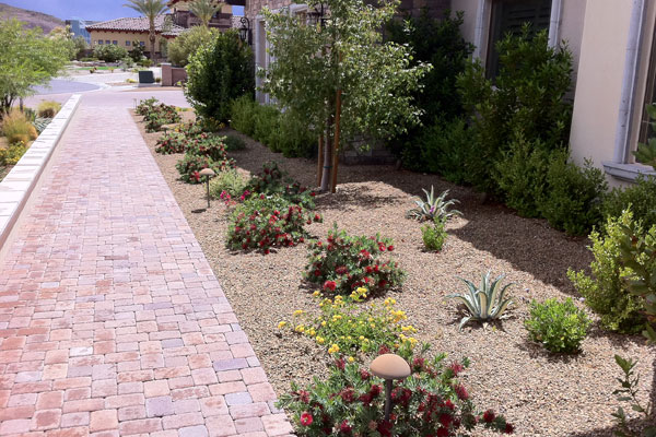 Order Xeriscapes