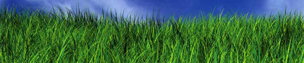 Order Lawn Care Services
