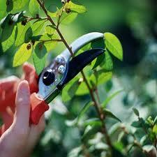 Order Pruning