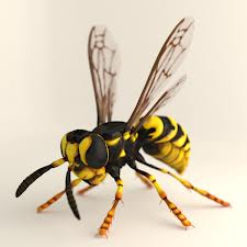 Order Wasps, Hornets & Bees Extermination Services