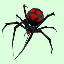 Order Black Widows Spiders Extermination